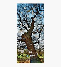 Old tree puzzle Photographic Print