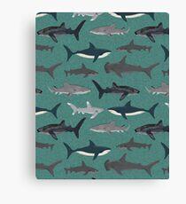 Sharks illustration art print ocean life sea life animal marine biologist kids boys gender neutral educational Andrea Lauren  Canvas Print