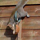 Squirrel in a Peebles garden by rosie320d