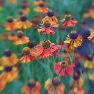 Dancing flowers by LauraZim