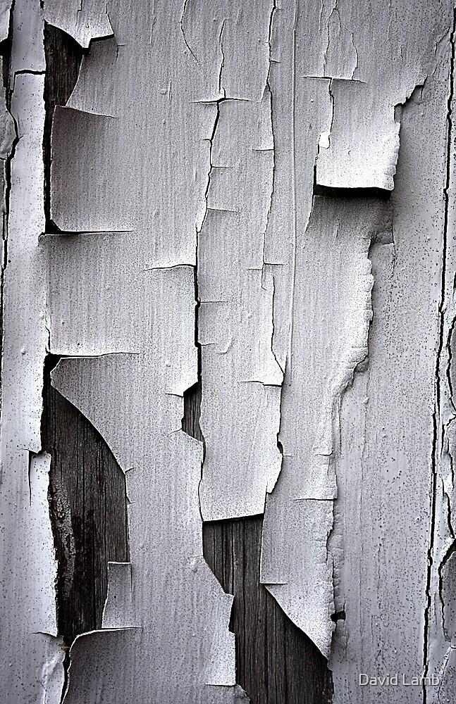 Shedding my Skin by David Lamb
