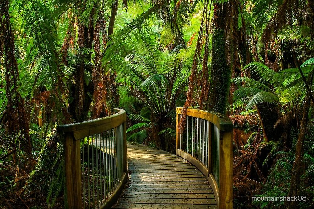 Otway Rainforest by mountainshack08