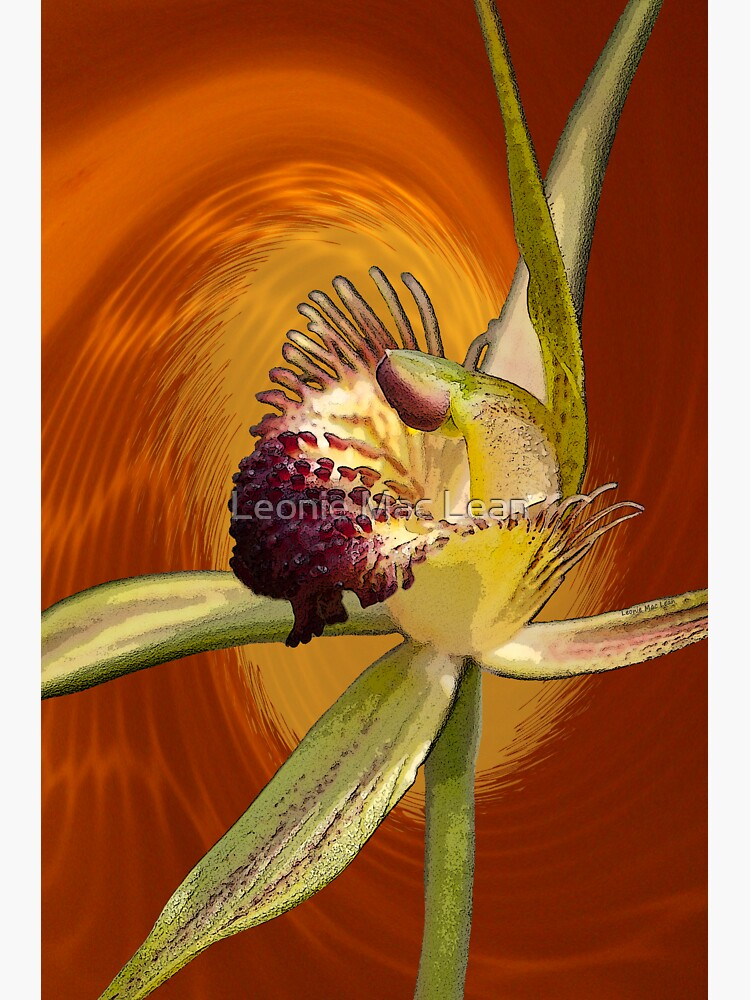 Swamp Orchid with Orange Swirl, native orchid. by yallmia