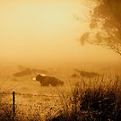 Cattle in the Fog by Clare Colins
