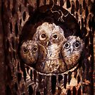 owl's nest by Marianna Tankelevich