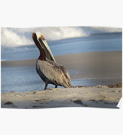 Oceanside Portrait of a Pelican Poster