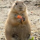 Prairie dog by MaartenMR