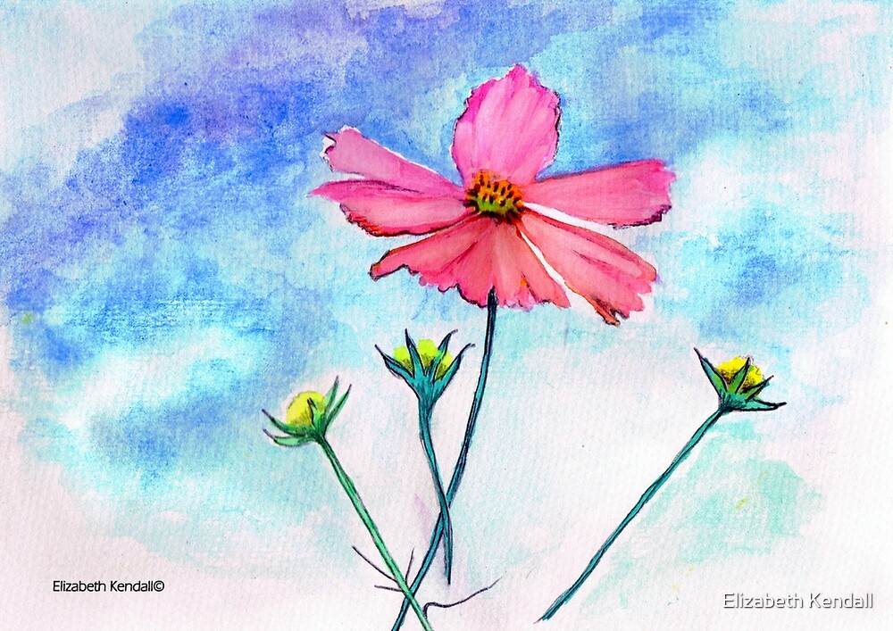 Almost time for cosmos flowers by Elizabeth Kendall