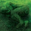 Sleeping On Grass by Cliff Vestergaard