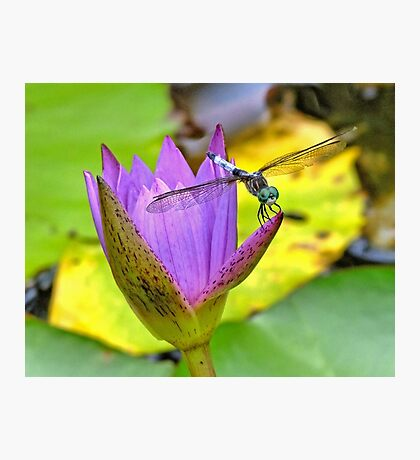 Dragonfly & The Bloom Photographic Print