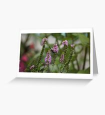 Wasp on Pink Veronica Flower Greeting Card