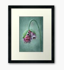 Frilly Petticoat Framed Print