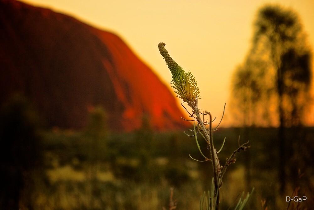 Central Australia Flower (Grevillea) by D-GaP