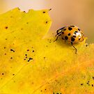 Lady Bug Out To Lunch by Tom Gotzy