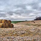 Harvest 2016 by Tom Gotzy