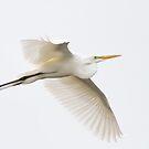 Great Egret - Florida by Jim Cumming