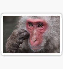 Snow Monkey Jigokudani Japan Sticker