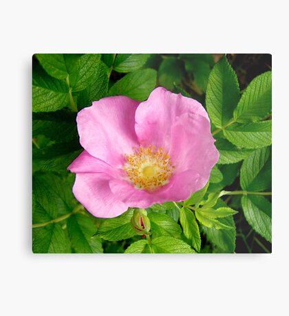 Wild Pink Rose Metal Print