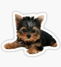 Pegatina Yorkie Pup