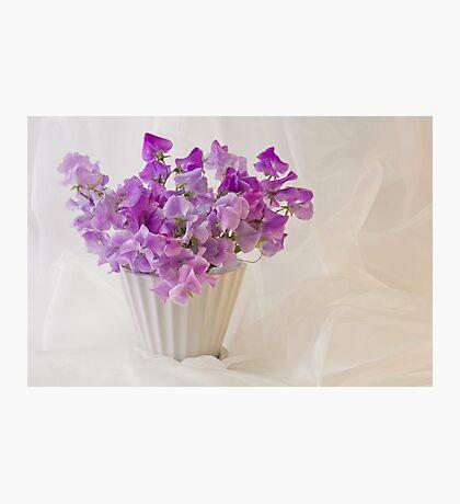 Lavender Sweet Peas And Chiffon Photographic Print