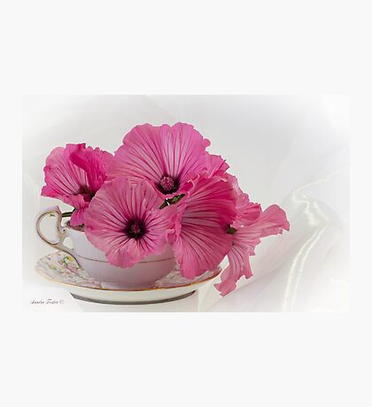 A Cup Of Pink Lavatera Flowers Photographic Print