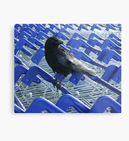 firm purchase (crow with shopping trolleys) Metal Print