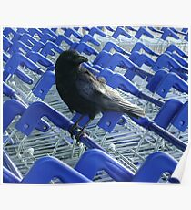 firm purchase (crow with shopping trolleys) Poster