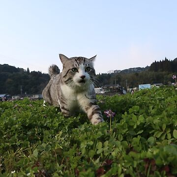 Cat found something by NYANKICHILABO
