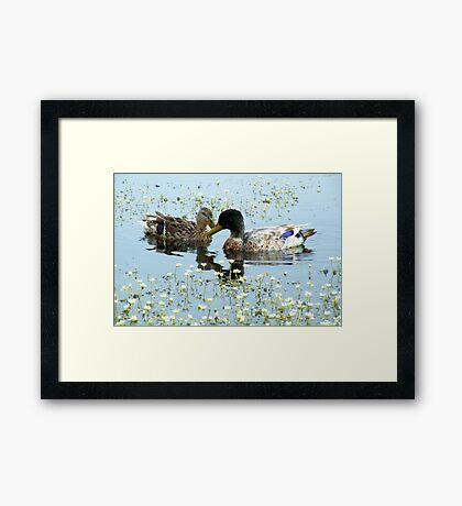 Romantic Ducks Framed Print