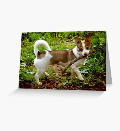 The Magnificent Mongrel Greeting Card