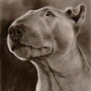 Bull Terrier Dog Dog Bully by art-of-dreams