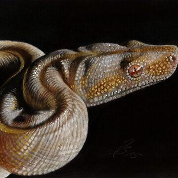 Snake Boa by art-of-dreams