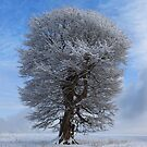 The beauty of winter. by robevans