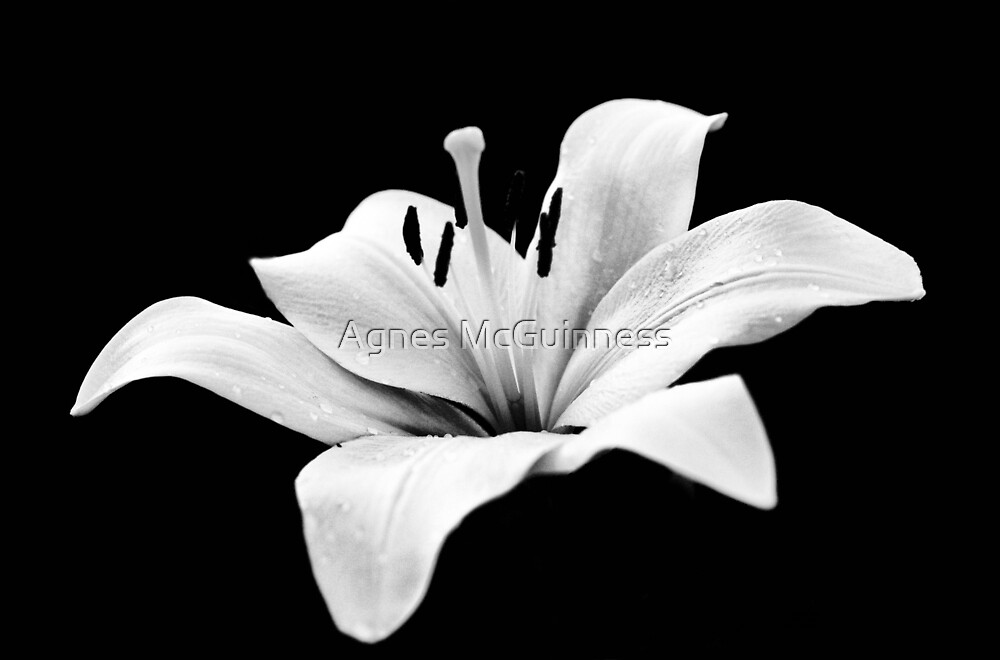 White lily - monochrome by Agnes McGuinness
