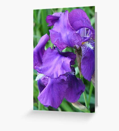 Beauty unfolding Greeting Card