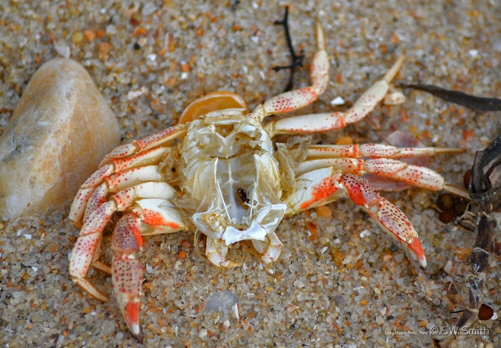 Mr. Crab | Long Beach Point, New York by © Sophie W. Smith