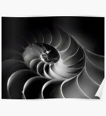 Nautilus Spiral in Intimate Light Poster