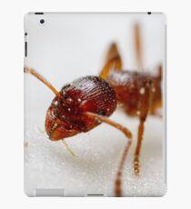 Extreme macro Ant on a clematis petal iPad Case/Skin