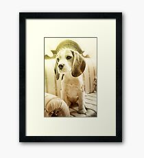 Cute Puppy Framed Print