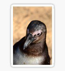 African Penguin Sticker