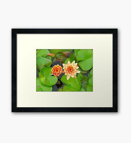 Summer Blooms Framed Print
