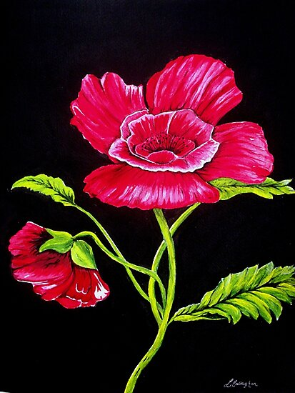 Poppy Flower by Linda Callaghan