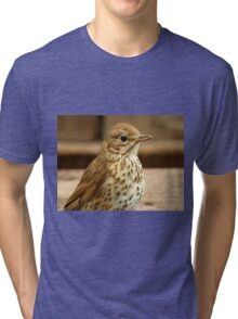 I'm As Beautiful As My Song Is..! - Song Thrush - NZ Tri-blend T-Shirt
