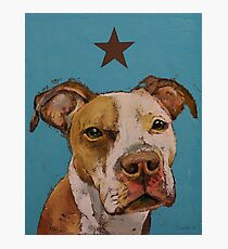 American Pit Bull Photographic Print