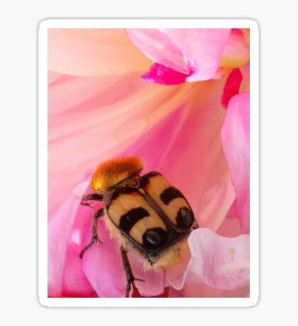Bee Beetle Sticker