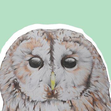 Tawny Owl by SachikoKawamura