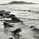 Seagull In Laguna Beach by K D Graves Photography