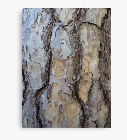 The pine tree closeup Canvas Print
