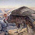 California Condor by NearBird