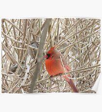 Little Cardinal Poster